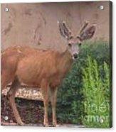 Reindeer In The Garden Acrylic Print