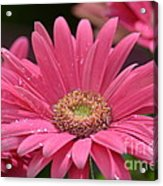Rejoice It's Spring Acrylic Print