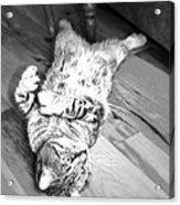 Relaxing Cat Acrylic Print