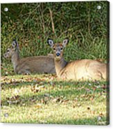 Relaxing In The Sun And Shade Acrylic Print