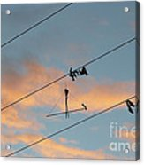 Remains Of Kite On The Electric Power Line Acrylic Print
