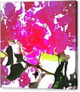 Remember My Big And Beautiful Bouganvillea Acrylic Print
