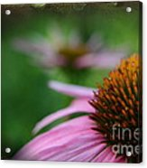 Remembering Renees Garden Acrylic Print by The Stone Age