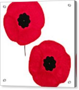 Remembrance Day Poppies Acrylic Print