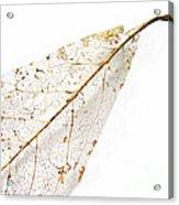 Remnant Leaf Acrylic Print
