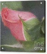 Rendition Of A Rose Acrylic Print
