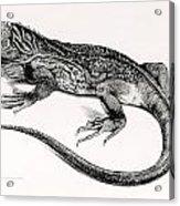 Reptile Acrylic Print