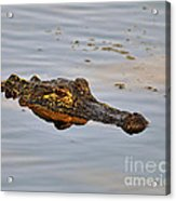 Reptile Reflection Acrylic Print by Al Powell Photography USA