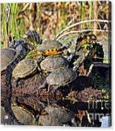 Reptile Refuge Acrylic Print