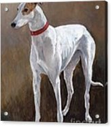 Rescued Racer Acrylic Print by Charlotte Yealey