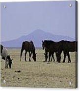 Reservation Horses 4 Acrylic Print
