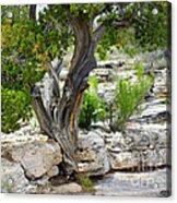 Resilient Tree Acrylic Print
