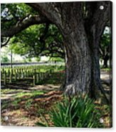Resting In The Shade Acrylic Print by Beth Vincent