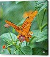 Resting Orange Butterfly Acrylic Print