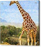 Reticulated Giraffe Kenya Acrylic Print
