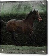 Retro Horse Acrylic Print