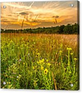 Retzer Wildflower Sunset Acrylic Print