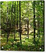 Wooded Path 13 Acrylic Print