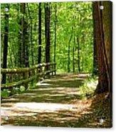 Wooded Path 15 Acrylic Print