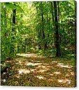 Wooded Path 16 Acrylic Print