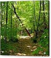 Wooded Path 17 Acrylic Print