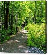 Wooded Path 20 Acrylic Print