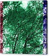 Rgb Trees Acrylic Print