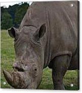 Rhino 2 Acrylic Print