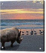 Rhino Beach Acrylic Print