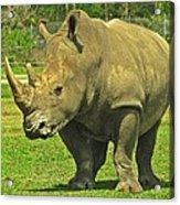 Rhino Look Acrylic Print