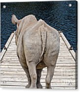 Rhino On The Dock Acrylic Print