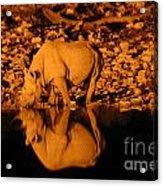 Rhino Reflection Acrylic Print