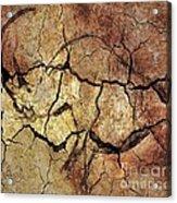 Rhinoceros From Chauve Cave Acrylic Print