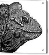 Rhinoceros Iguana Acrylic Print