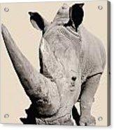 Rhinocerosafrica Acrylic Print