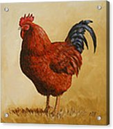 Rhode Island Red Rooster Acrylic Print by Crista Forest