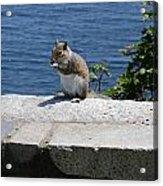 Rhode Island Squirrel Acrylic Print