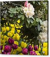 Rhodies And Tulips Acrylic Print