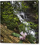 Rhododendron At The Falls Acrylic Print