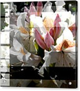 Rhododendron Collage Acrylic Print