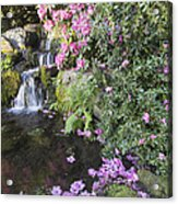 Rhododendron Flowers By Waterfall Acrylic Print