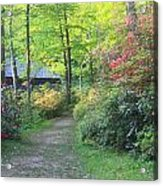 Rhododendron Path In Evening Light Acrylic Print