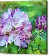 Rhododendrum Acrylic Print