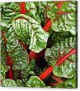 Rhubarb Abstract Acrylic Print