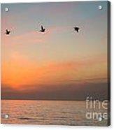Rhythm Of The Sunset   Acrylic Print