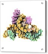 Ribozyme Enzyme And Rna Acrylic Print