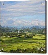 Rice Farming In China Acrylic Print