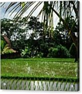 Rice Fields Bali Acrylic Print