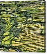 Rice Fields Sapa II Acrylic Print