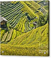 Rice Fields Terraces Acrylic Print